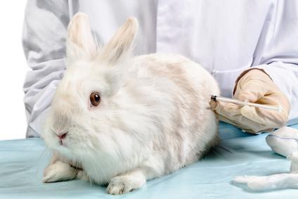 Kaninchen mit Spritze