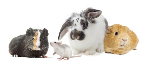 Heimtiere Kanichen Meerschweinchen Mäuse