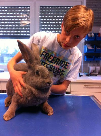 Kaninchen nach RHD Impfung